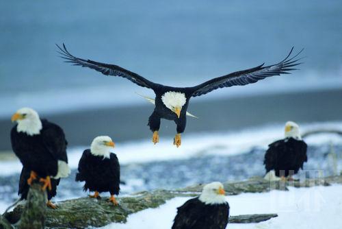 人与动物兽交_阿拉斯加:野性与人性交相闪烁的广袤之地