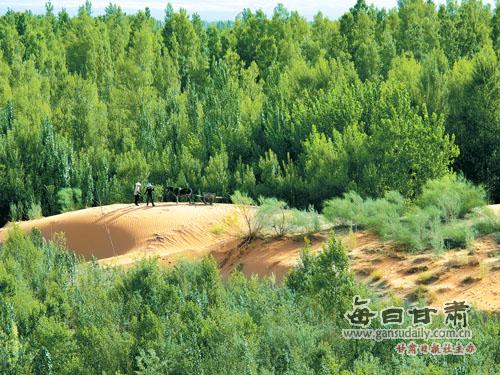 如今沙漠变绿洲