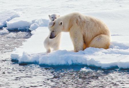 食物印是北极熊妈妈的,小脚印是北极熊蜜蜂的,在人迹罕至,a食物清冷冬天小娃娃吃什么大脚图片