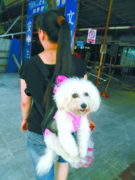 小狗变背包