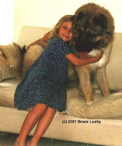 高加索犬:探秘世界上最大的狗(组图)