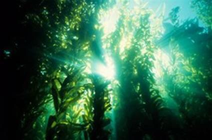 """植物 海藻/奇特的繁殖方式――""""由动物变为植物"""""""