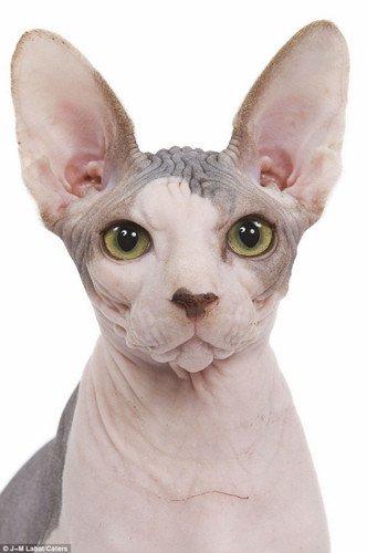 人与兽1715ia{0_it数码新闻滚动_搜狐资讯    毛茸茸的宠物人人爱,那些少毛的猫猫狗狗