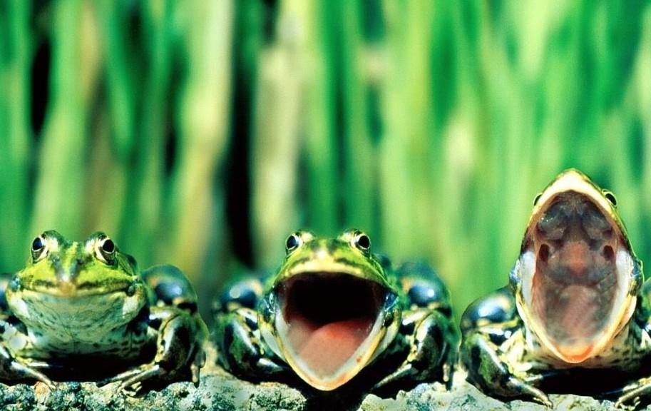 各种稀奇古怪的青蛙