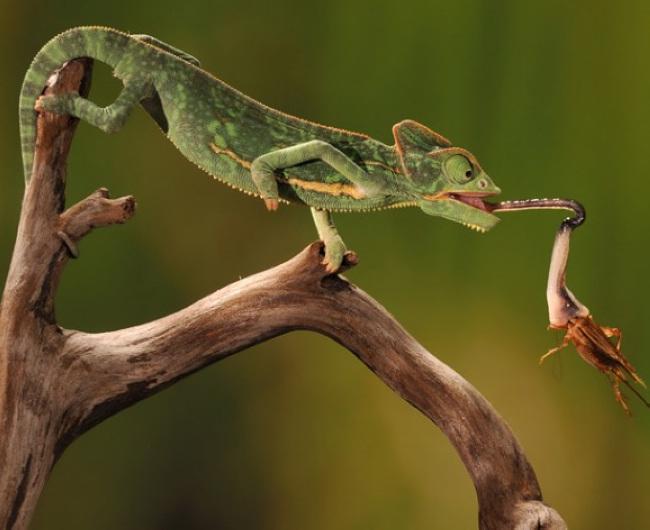 摄影师抓拍动物精彩瞬间(组图)