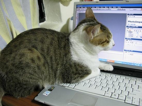 我要看黄片亲亲云播�_宅猫的生活写照 打游戏看黄片(图)
