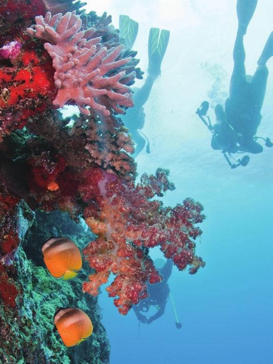 海底动物树叶粘贴画