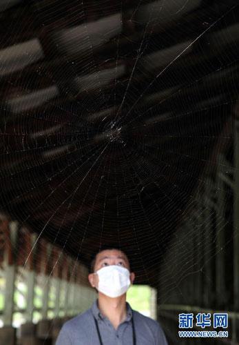 """在日本福岛县饭馆村,一处闲置的养牛场内已结有蜘蛛网。""""饭馆牛""""是日本和牛的名品之一,受核辐射影响,饭馆村的畜牧业遭到灭顶之灾。(9月10日摄)"""