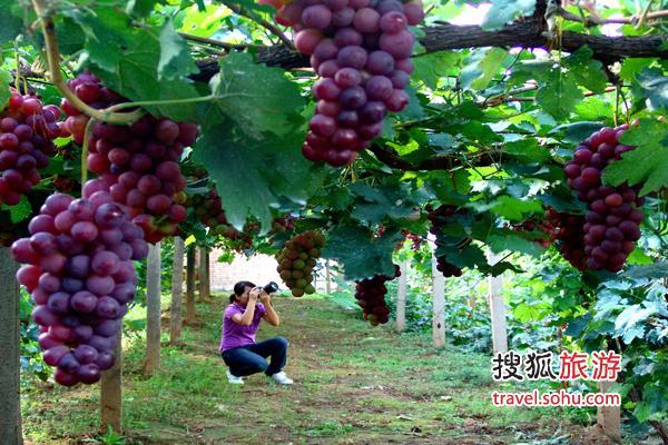 2011年北京(延庆)国际葡萄文化节