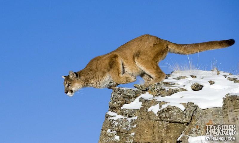 探秘神奇大自然:震撼视觉的动物摄影(组图)