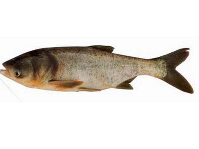 13种常见食用鱼的营养价值