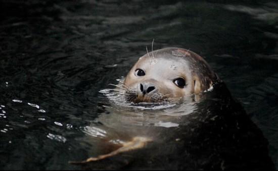 """盘点最可爱的动物宝贝:""""水獭宝宝""""爱睡觉(图)"""