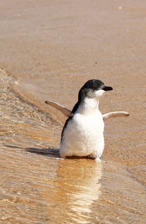 快乐的企鹅宝宝。