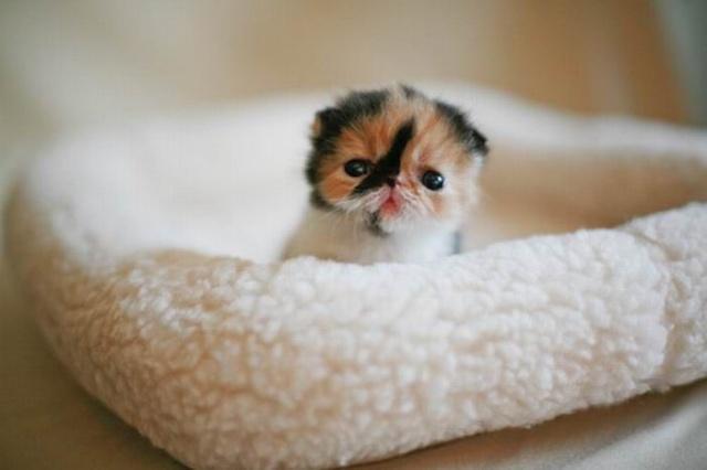 世界上最可爱的小猫(组图)