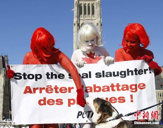 加拿大首都渥太华,三名善待动物组织成员将身体彩绘成加拿大国旗图案