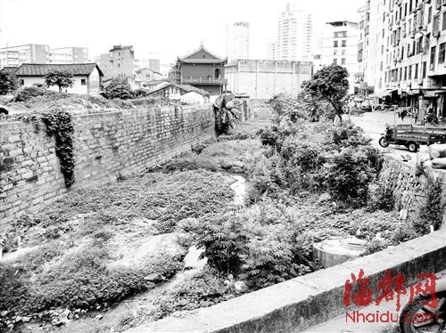 北河河道中长满野草,居民生活污水排入其中,恶臭不堪