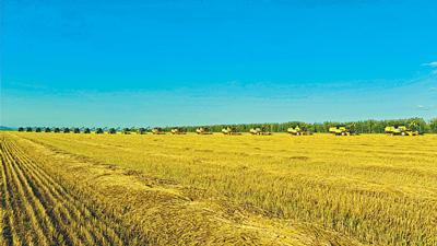在确保农民种得好的同时,国家又通过粮食收购托市,让农民真正种田图片
