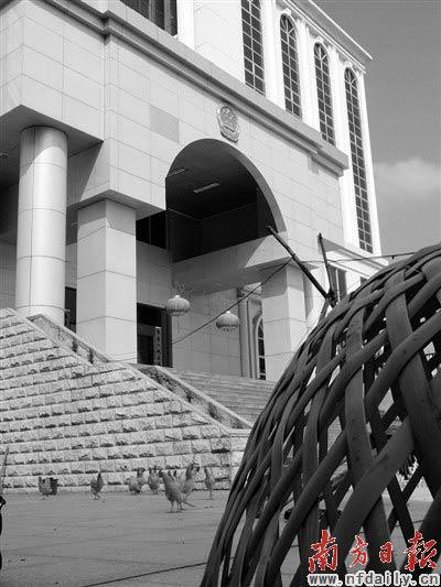 """2004年已完工的龙川法院审判大楼因工程款纠纷被闲置,如今工人在院内养起""""走地鸡""""。 胡亚柱 摄"""