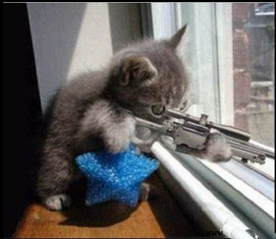这么专业的姿势,这么镇定的表情,这只猫应该去当专业狙击手了.图片