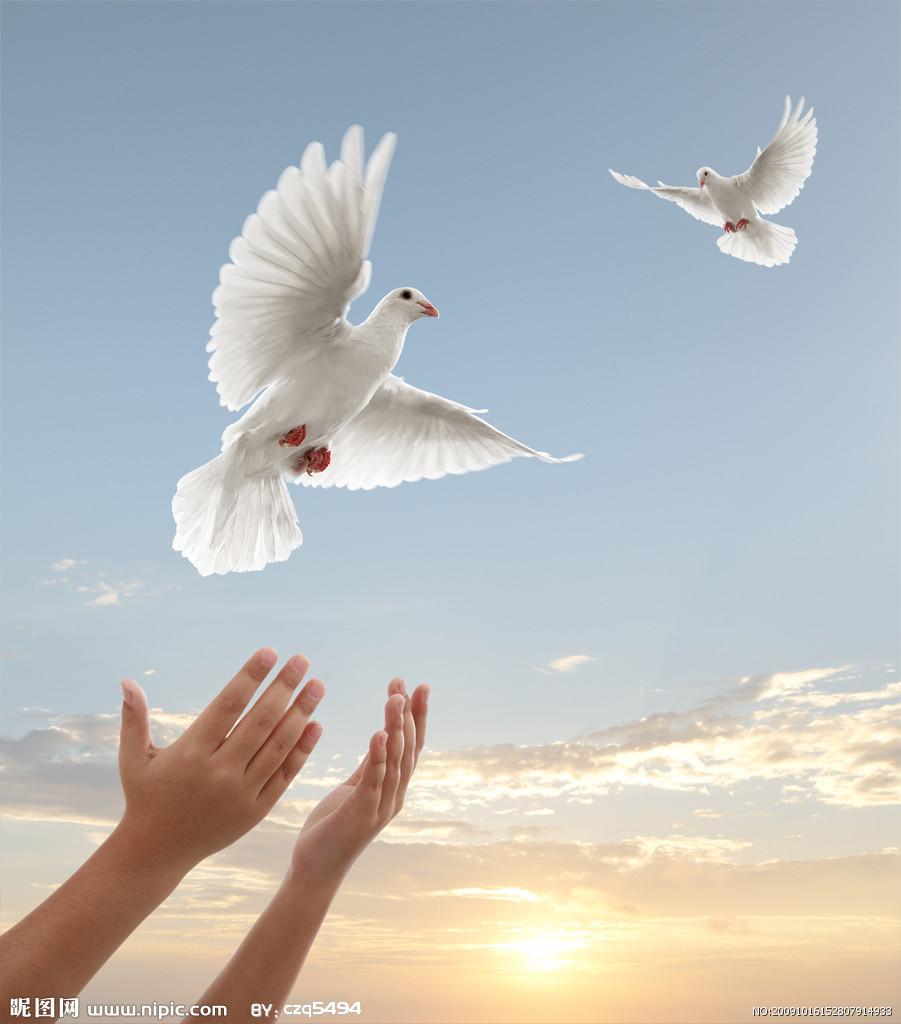 鸽子象征和平友谊