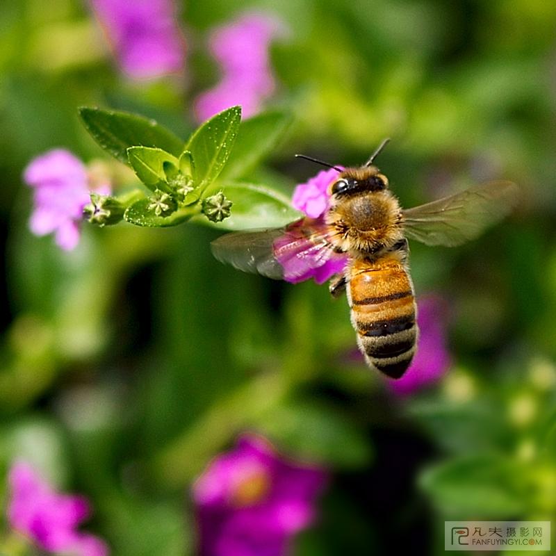 蜜蜂象征勤劳无私为什么草食恐龙脖子长图片