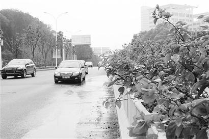 图为:车行花中。