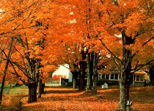 秋季去加拿大赏风情枫叶(组图)