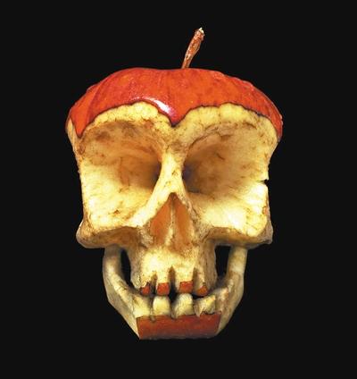 苹果解剖结构图
