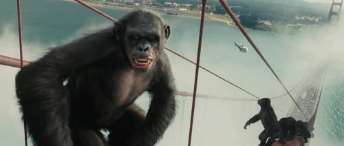 如此角度俯瞰金门大桥,恐怕也只有猩猩能做到了