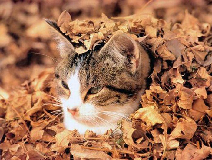 亚洲金猫_落叶中的猫咪(组图)