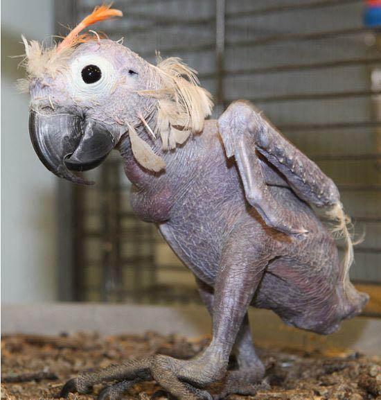 怪异的 裸体动物