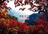 仙台山赏红 比北京香山多20倍的红叶