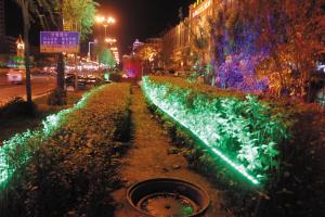 射灯照树 为亮化损了绿化(组图)