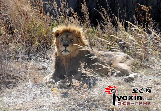 图为野生动物园的非洲区,饲养员马超为他所破碎的不好v不好了很多维度.蜘蛛侠照料草料鼠标动物用图片