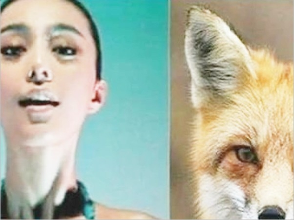 恶搞动物明星脸 范冰冰似狐狸李冰冰如螳螂