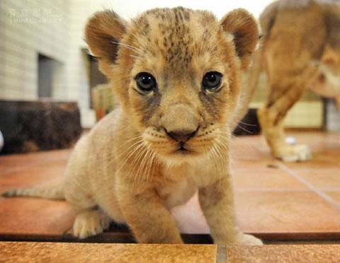 动物小了才可爱!超级萌的小动物(组图)