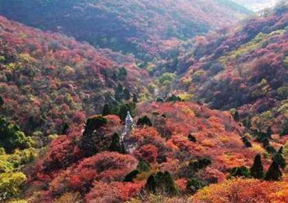 香山红叶盛会携拍摄利器海尔相机x100