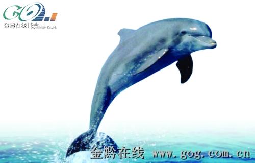 手绘插画跃出水面的海豚矢量图