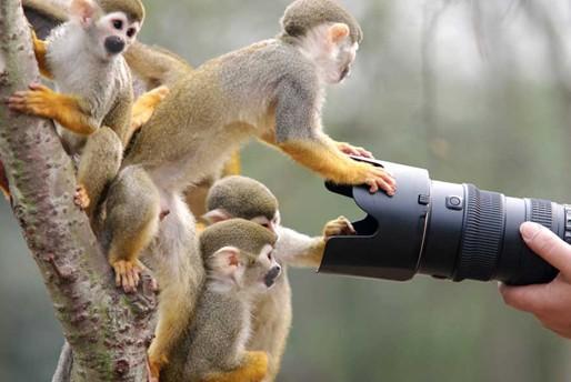 人与动物之性_重庆野生动物世界:人与自然的和谐之美(组图)-搜狐滚动