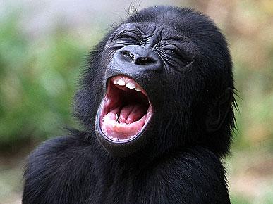动物经典搞笑表情【组图】(1)图片