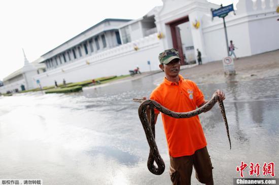 曼谷抗洪进入关键期 著名旅游景点现巨蟒(图)