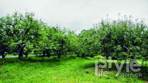 周末偷闲| 苹果熟了!京郊秋果采摘地图