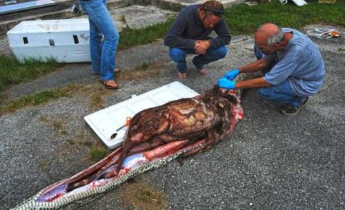 8米长巨型蟒蛇 吞食一整只成年鹿(组图)