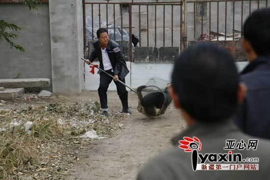 新疆克拉玛依白碱滩区小学成患伤人伤畜年级语文教学论文小学一野狗图片