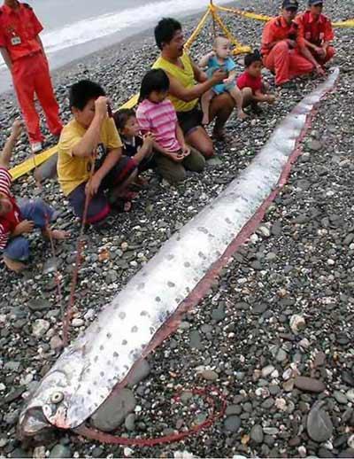 长江捞起一条怪鱼 水库现10万斤怪鱼 厦门现异化怪鱼图片