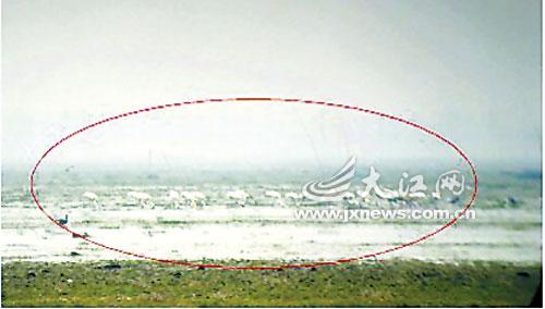 鄱阳湖保护区沙湖站已监测到了白鹤。通讯员金路遥摄