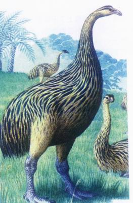 种动物 渡渡鸟名气堪比恐龙