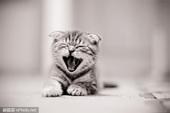 『宠物摄影』拍摄猫咪的简单技巧