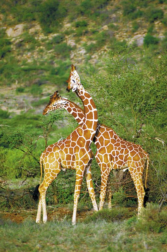 讲到许多物种,包括哺乳类,鸟类,爬行类,两栖类,昆虫,软体动物,以及线