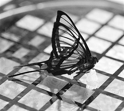 能感知一只蝴蝶停在上面的压力的电子皮肤。
